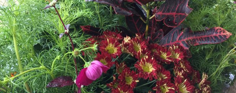 花壇のディスプレイ