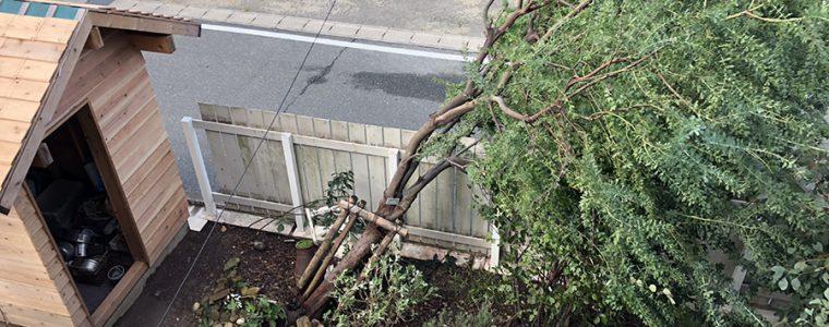 台風24号の影響